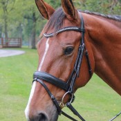 Veritas Raised Dressage Snaffle Bridle by Vespucci